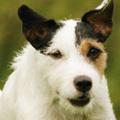 Post image for Gratisprobe Bosch Hundefutter