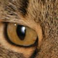Post image for Gratisprobe Bosch Katzenfutter