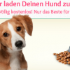 Thumbnail image for Gratis Probe Hundefutter anfordern